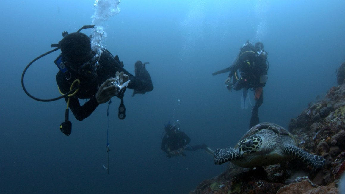 Diving di TN Komodo (Foto: @ottoerdinand)