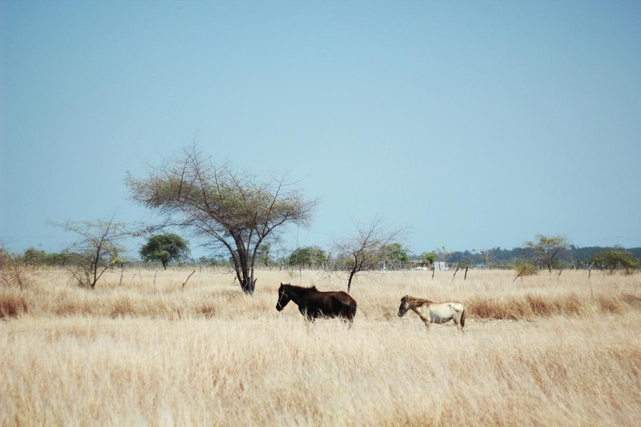 Dry Season Sumba